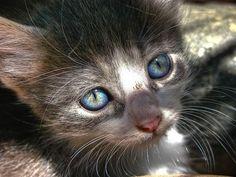 Beautiful, Beautiful Blue Eyes