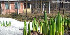 Сезонные работы на огороде в апреле - Подробности: http://dachniki.info/sezonnye-raboty-na-ogorode-v-aprele-3331.html