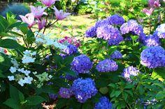 Roses du jardin Chêneland