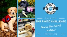 NEW PHOTO CONTEST: We want to see your SDITs in action! To enter to win all SDWR volunteers have to do is continue to post pics of your pup on the SDWR Facebook page via Email to Buffer.   To qualify your Service Dog in Training must:  Be wearing their SDWR vest  AND Be in action while practicing training  Try to make sure the SDWR logo on the vest is totally visible! Submit multiple photos to increase your chances of winning.  A variety of cool prizes up for grabs! Just follow the…