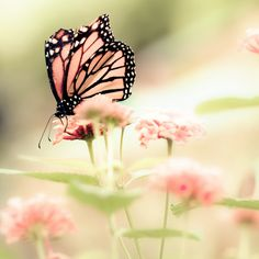 Butterfly photograph, fresh mint, Spring, pink, dusty rose, girl's room, fairytale, mint, pastel - Queen of Spring 8x8 - via Etsy.
