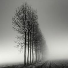 Landscapes Tree Photography by Pierre Pellegrini De la serie: Bruma ITree Photography by Pierre Pellegrini De la serie: Bruma I Tree Photography, Amazing Photography, Landscape Photography, Photography Composition, Exposure Photography, Digital Photography, Landscape Photos, Ansel Adams Photography, Depth Of Field Photography