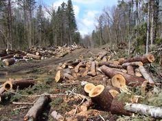 Memberantas maraknya kasus illegal loging yang terjadi di Kabupaten Sumbawa perlu dilandasi adanya komitmen bersama, antara pemerintah