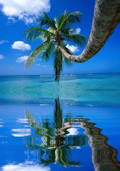 New Wonderful Photos: Palm Tree Cool Pictures, Beautiful Pictures, Summer Pictures, Palmiers, Photos Voyages, Am Meer, Jolie Photo, Hd Desktop, Tropical Paradise