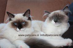 Lady en Luna Kat | Pawshake Aalsmeer