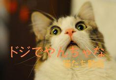 """人間にたくさん癒しを与えてくれる、ネコたち。 でも、時々手に負えないやんちゃぶりを発揮することも・・・ ネコ達のいたずら動画をご紹介します。 """"キック"""" に """"パンチ!!"""" ドジでやんちゃなネコたち♪ 元気いっぱいのネコたちは、何かしでかしてくれるもの。 破壊力満点の""""猫パンチ""""をご覧ください。 https://www.youtube.com/watch?v=eNMU9yfdnW0 キックやパンチを超えて、飛び蹴りに近いことをしているネコちゃんもいましたね。 何人の子どもが泣いたことか・・・ あと、仲間のネコを蹴落しているネコちゃんもいましたね。 ときに、敵は身内にあり!? お主も、なかなかワルよのう~ テーブルの上のリモコンを、慣れた手つきで落としたネコちゃん。 その手がついにガラスのコップにまで伸びていき・・・ この結末をご覧ください。 https://www.youtube.com/watch?v=uBqk3yNiTX0 予想通りの結末でしたね。 それにしても、この子、すごく悪い顔してましたね~ 飼い主に """"No…"""