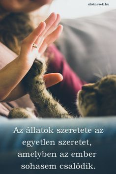 Kittens Cutest, Cute Cats, Funny Cats, Cat Tail Language, Cat Years, Cat Drinking, Weird Creatures, Cat Quotes, Cat Facts