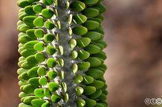 Cactus Garden Lanzarote By Elena Trombetta
