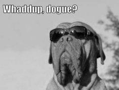 I love Dogue de Bordeauxs!!!