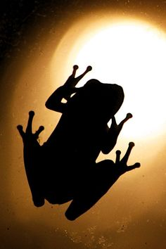 Don't u guys have anything better to do then play mini gulf lol te Shadow Silhouette, Black Silhouette, Silhouette Cameo, Photography Challenge, Frog And Toad, Light And Shadow, Sea Creatures, Beautiful Images, Bunt