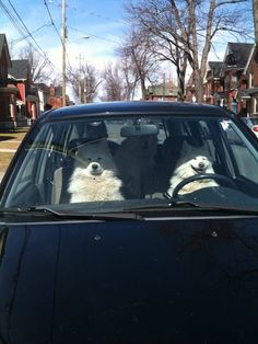 Dogs in cars crack me up