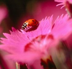 Ladybug/Beetle's Wisdom includes:  -carries the Golden Strand that leads to the center of the universe  -past lives  -spiritual enlightenment  -death and rebirth