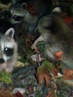 These little ones walked up to me when I was out running my coon hounds