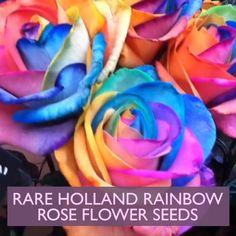 Unusual Flowers, Rare Flowers, Amazing Flowers, Beautiful Roses, Growing Roses, Growing Plants, Asian Garden, Rainbow Roses, Exotic Plants