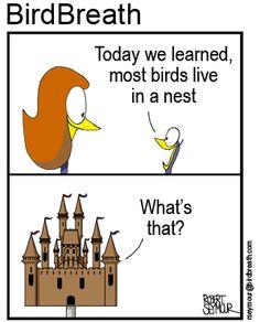 My online bird blog