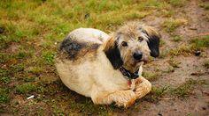 muddy baby