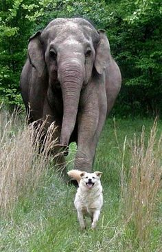 Tara {the elephant} & Bella {the dog} are best friends.  a sweet/true story