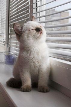 cute kitten looking out window longingly | Cute Picture | Kitten | Looking Out of a Window | Cutearoo | Puppies ...