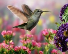 The Ultimate Dining Guide for Hummingbirds