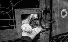The Resilience Of Shelter Dogs In Russia Transformed One Photographer's Outlook…