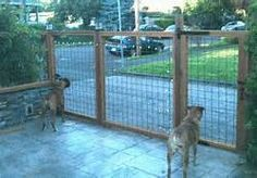 Cheap Fence Ideas - I like the way this one looks. and cheap rolls of wire fence isn't too hard to find.