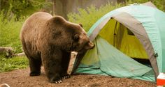9 Smart Ways to Help Make Your Campsite Bear Proof