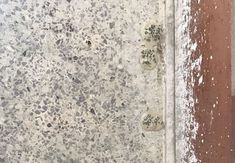 Terrazzo Floor Restoration Fort Lauderdale - Colonial Floor and Stone Care Floor Restoration, Concrete Materials, Best Cleaning Products, Grout Cleaner, Terrazzo Flooring, Easy Jobs, Palm Beach County, Types Of Stones, Lots Of Money