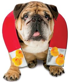 Chick Magnet Pet Costume Includes: (1) themed magnet costume with attached chicks. Weight (lbs) 0.19 Length (inches) 12 Width (inches) 10 Height(inches) 0.5