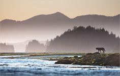 Die hohe Luftfeuchtigkeit im pazifischen Nordwesten hüllt Inseln und Berggipfel oft in mystische Nebelschleier. Die Region ist Heimat mehrerer Wolfsrudel, für die der Nahrungsreichtum Clayoquot Sounds paradiesische Bedingungen schafft (Foto von: Sander Jain)