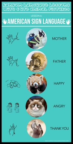 """I saw the sign... Another #Quizmaster's """"Random #LanguageLesson with Cute Animal Pictures"""" #infographic - This week: ASL"""
