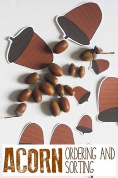 Acorn Ordering and Sorting for Toddlers and Preschoolers Preschool Songs, Preschool Learning Activities, Play Based Learning, Autumn Activities, Infant Activities, Early Learning, Preschool Activities, Simple Math, New Teachers