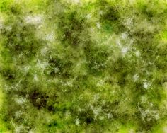 Moss by shardinite