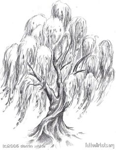 Img18037_willow_tree_drawing_thumb.jpg picture by dumblondy991 - Photobucket