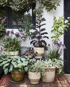 Urban Garden If you only have a small garden courtyard or balcony experimenting with container gardening is worth a thought. Garden If you only have a small garden courtyard or balcony experimenting with container gardening is worth a thought. Lake Garden, Backyard Garden Design, Small Garden Design, Garden Cottage, Backyard Landscaping, Terrace Garden, Dream Garden, Backyard Ideas, Garden Ideas For Small Spaces