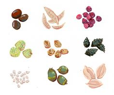 Nature's Collection on Behance