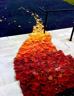 Follow the leaf road!