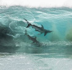 Australian photographer Sean Scott captured remarkable shot of two sharks within a crystal clear wave. In addition to his amazing shark photography, the photographer has an incredible portfolio of gorgeous waves and wildlife. No Wave, Big Shark, Shark Swimming, Shark In The Ocean, Shark Art, Orcas, Australia Occidental, Shark Pictures, Shark Images