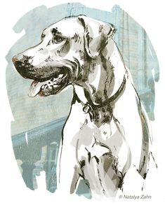Rhodesian Ridgeback, Oscar dog - illustration by Natalya Zahn