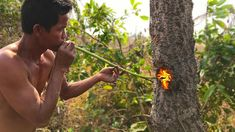 Primitive Culture Nature Cut Tree Using Fish Oil And Tree Resin