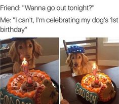 "101 best funny dog memes - ""Wanna go out tonight?"" lustig 101 Best Funny Dog Memes to Make You Laugh All Day Funny Dog Memes, Funny Animal Memes, Cute Funny Animals, Cute Baby Animals, Funny Cute, Funny Dogs, Dog Funnies, Funny Humour, Funny Captions"