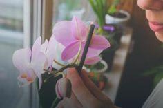 Korzeń imbiru to silny spalacz tłuszczu. Przepis na napój imbirowy Orchids, Plants, Lion, Gardening, Leo, Lawn And Garden, Lions, Plant, Planets