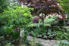 A path through the shade garden.