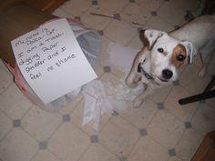 My name is Polka-Dot. I am a Trash-digging paper shredder and I feel no shame.