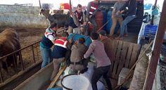 #GÜNDEM Muğla'da 830 litre sahte içki ele geçirildi: Yatağan ilçesi Bozüyük mahallesinde jandarmanın bir eve yaptığı yaptıkları aramada…