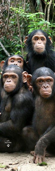 La famille des singes
