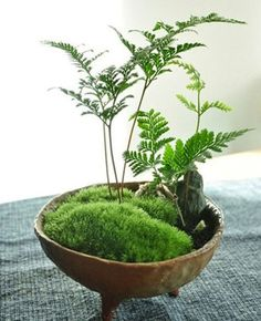 A combinação de pedra e plantas provê passividade ao ambiente.