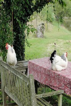 Hen's Country Farm, Country Life, Country Girls, Country Living, Country Roads, Country Bumpkin, Fancy Chickens, Chickens And Roosters, Down On The Farm