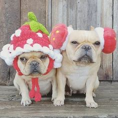Yessss!!!! All puppies need earmuffs and knitted hats!