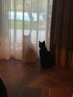 Quién es la sombra de quien?