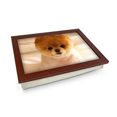 Short Haired Pomeranian Dog Lap Tray Personalised Gifts Unique, Unique Gifts, Lap Tray, Breakfast In Bed, Pomeranian, Wooden Frames, Cleaning Wipes, Dogs And Puppies, Teddy Bear